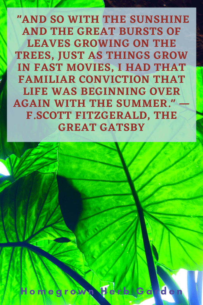 """""""And so with the sunshine and the great bursts of leaves growing on the trees, just as things grow in fast movies, I had that familiar conviction that life was beginning over again with the summer."""" —F.Scott Fitzgerald, The Great Gatsby"""