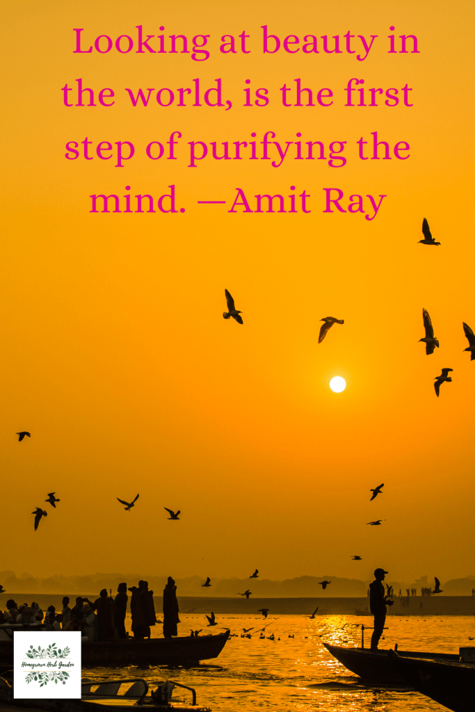 Looking at beauty in the world, is the first step of purifying the mind. —Amit Ray