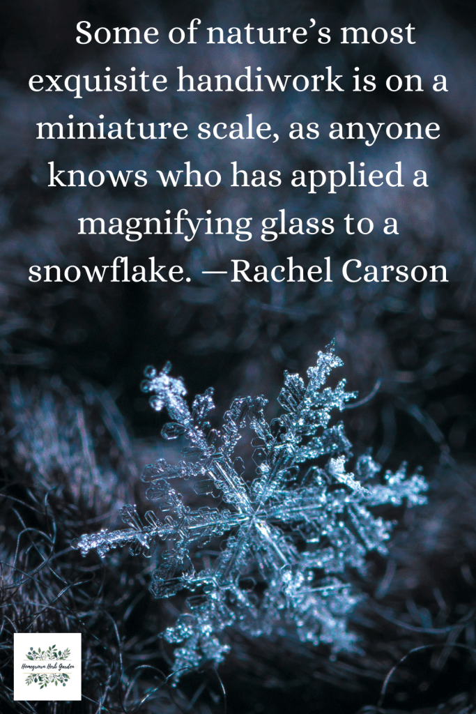 Some of nature's most exquisite handiwork is on a miniature scale, as anyone knows who has applied a magnifying glass to a snowflake. —Rachel Carson