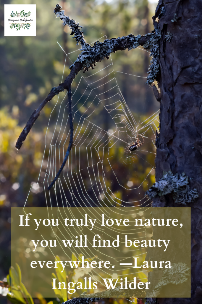 If you truly love nature, you will find beauty everywhere. —Laura Ingalls Wilder