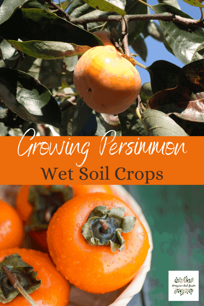 wet and soggy soil loving persimmon