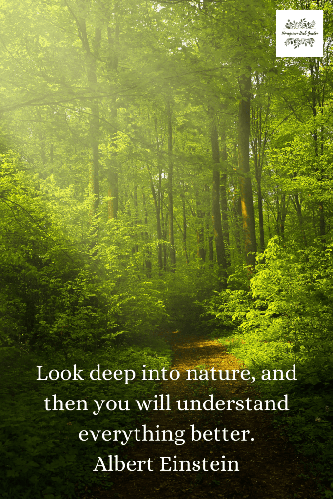 Look deep into nature, and then you will understand everything better. Albert Einstein
