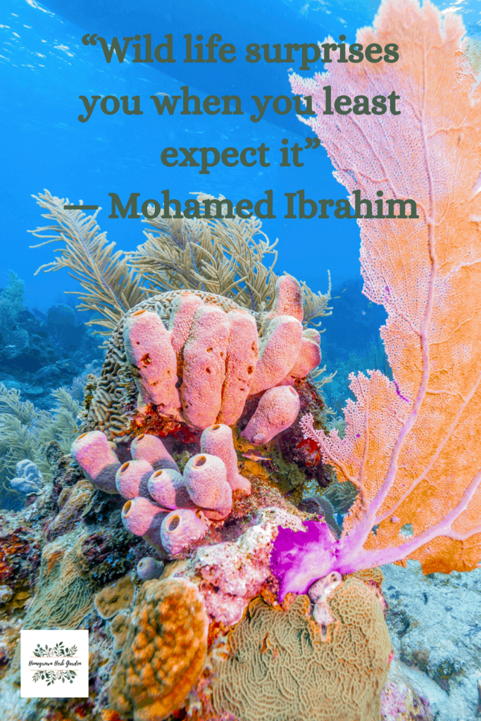 """Wild life surprises you when you least expect it"" ― Mohamedibrahim"