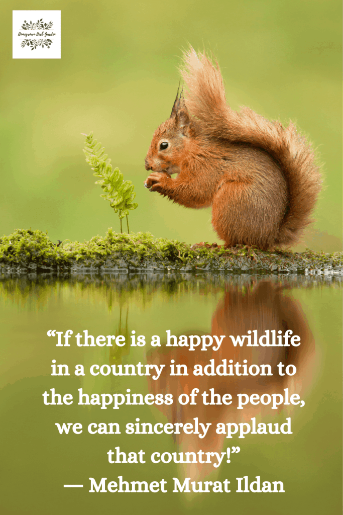 """If there is a happy wildlife in a country in addition to the happiness of the people, we can sincerely applaud that country!"" ― Mehmet Murat ildan"