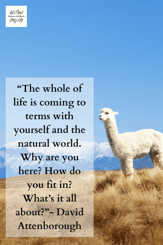 """The whole of life is coming to terms with yourself and the natural world. Why are you here? How do you fit in? What's it all about?""- David Attenborough"