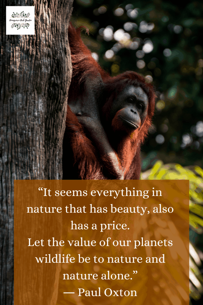 """It seems everything in nature that has beauty, also has a price. Let the value of our planets wildlife be to nature and nature alone."" ― Paul Oxton"