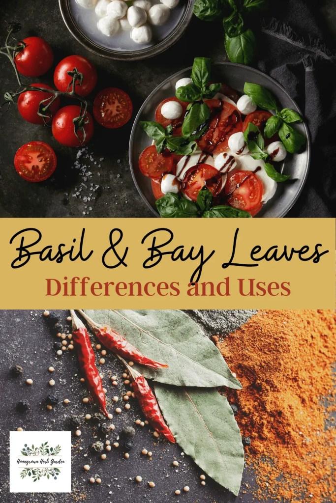 basil vs bay leaves and uses