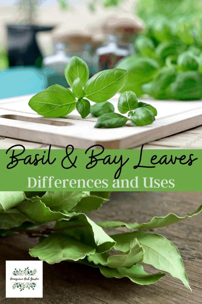 basil vs bay leaves