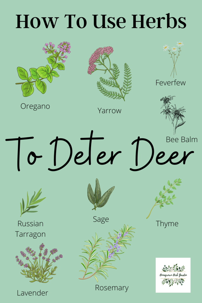 how to use herbs to deter deer