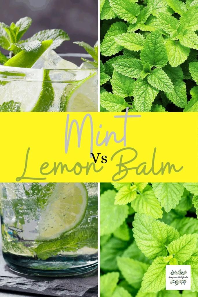 mint vs lemon balm