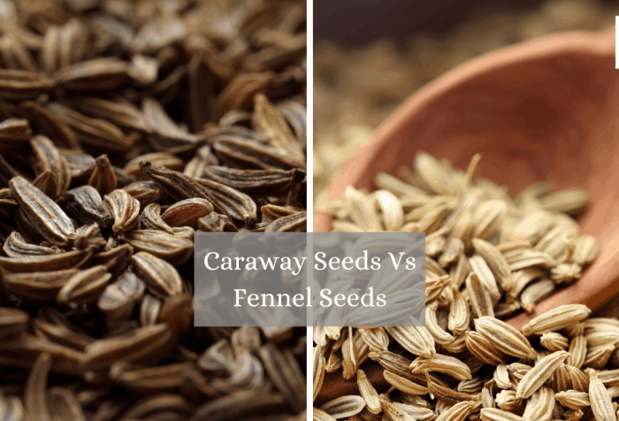 caraway seeds vs fennel seeds