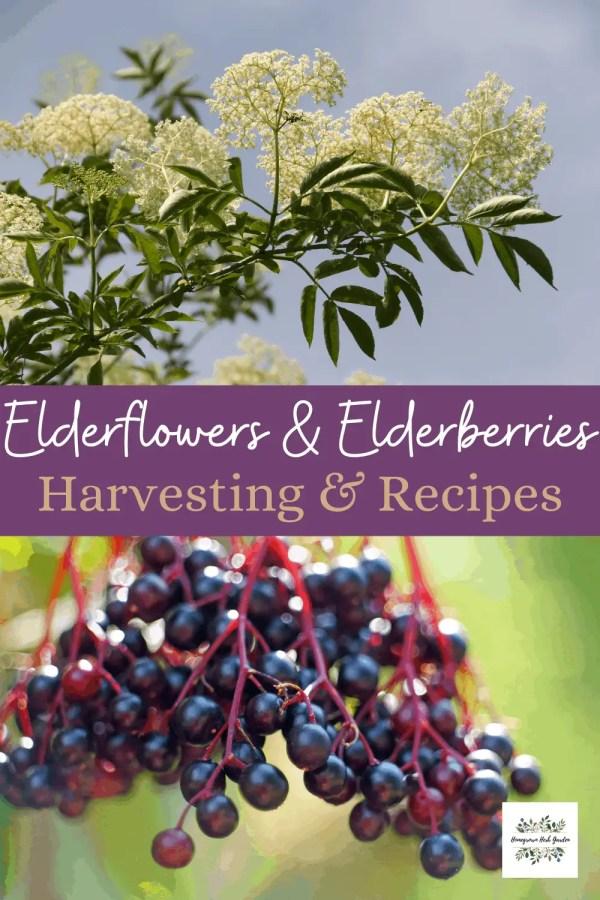 elderflowers vs elderberries
