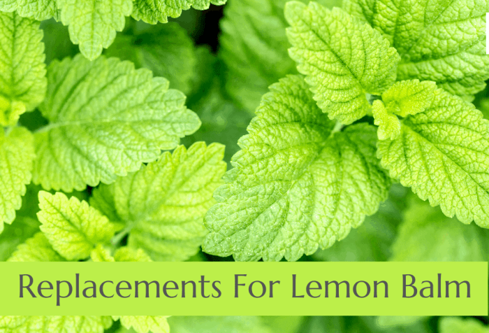 replacements for lemon balm