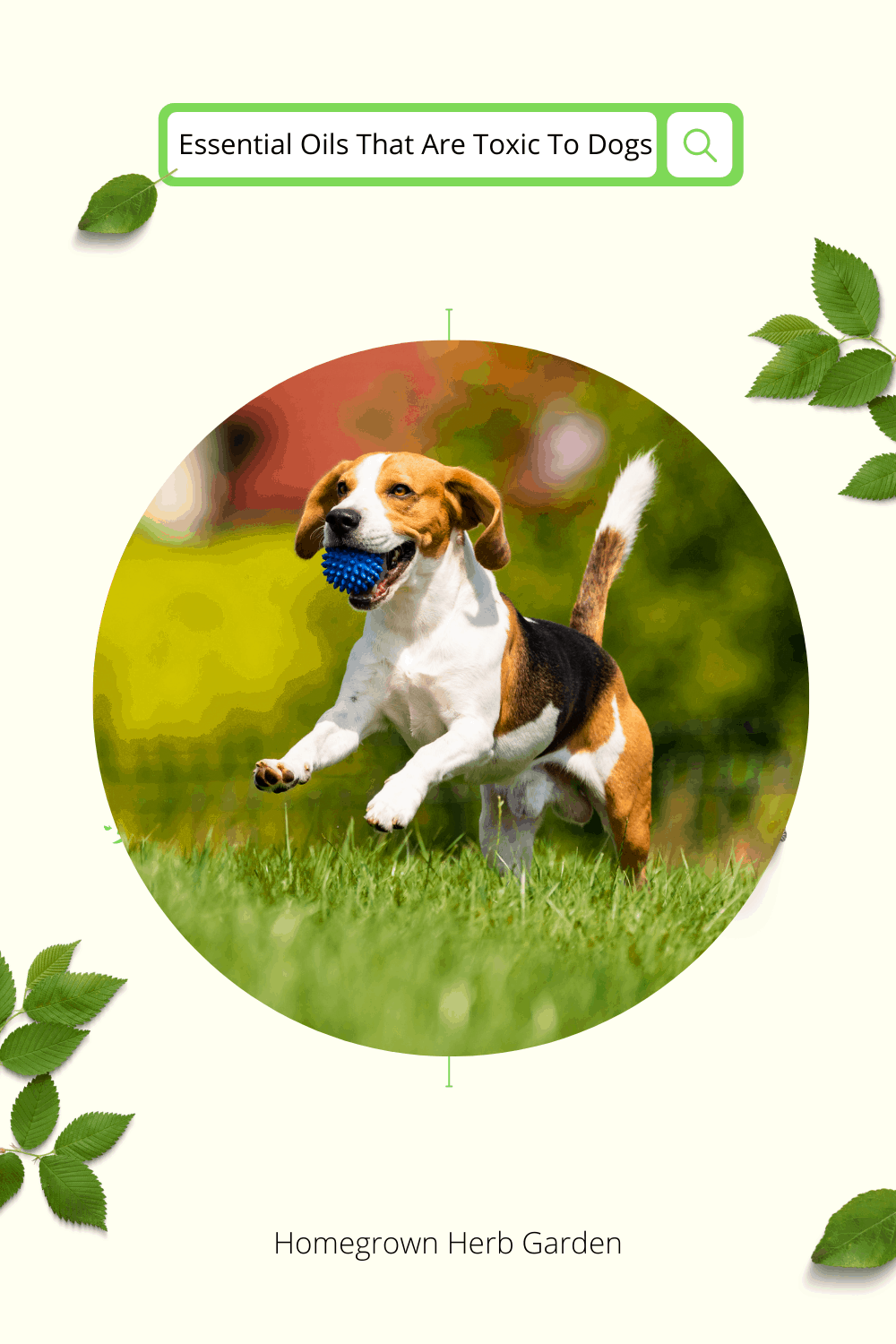 essential oils that are toxic to dogs