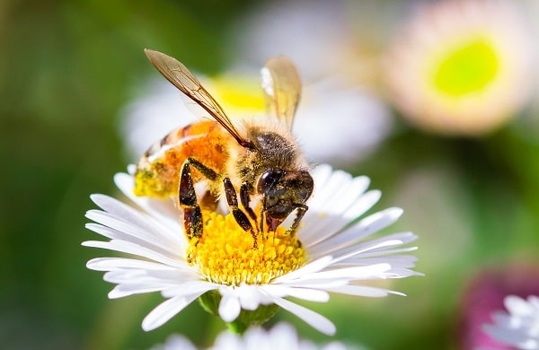 Benefits Of Honey Bees