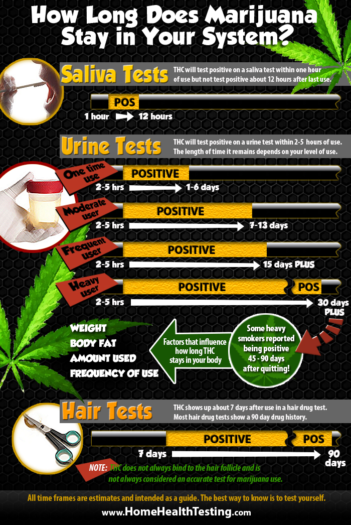 How Long Does Marijuana Stay In Your System? Infographic