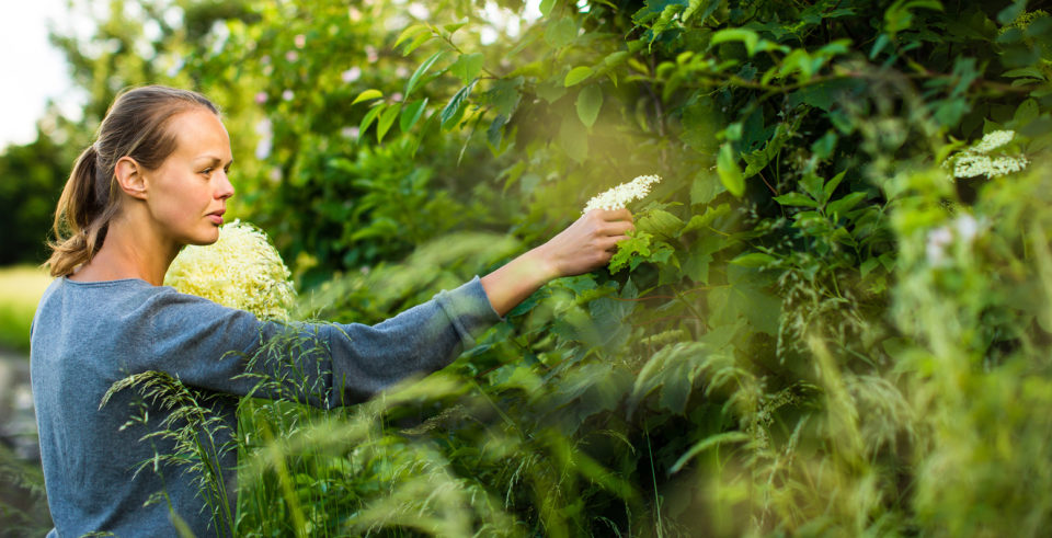 Herbalism Courses