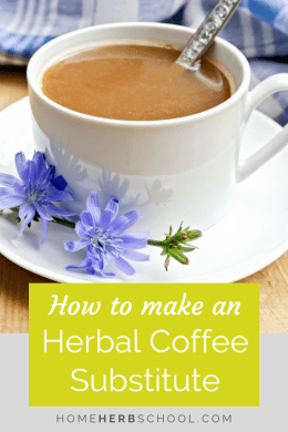 Learn how to make a healthy coffee substitute with chicory. Chicory is a tasty herb that is oftem used in herbalsim for its healthy benefits. #Herbalism #HerbalMedicine #CoffeeSubstitute