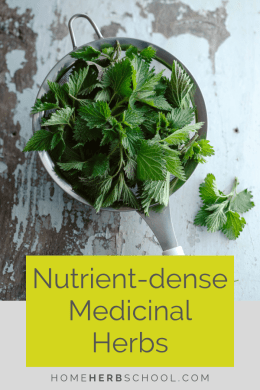 Herbalism looks to many medicinal herbs high in nutrients to offer significant health and wellbeing. Learn about these highly beneficial and easy to find medicinal plants. #Herbalism #HerbalMedicine #HerbsHighNutrition