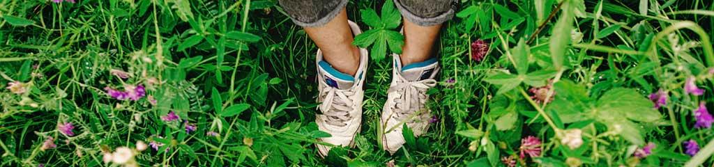 Top tips for beginner herbalists