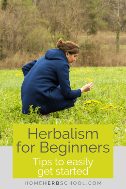 Learn the top herbalism for beginners tips. Learning about medicinal plants is easier than you think! #LearningHerbalism #LearnMedicinalPlants #HerbalismCourses