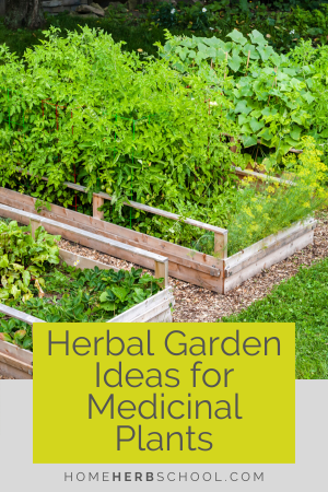 Discover the many herbal garden ideas for medicinal plants. Growing your own herbal medicine has so many benefits. You will have quick and easy access to medicinal plants when you need them. You will also have the finest quality plants for your herbalism needs. #OnlineHerbalismCourses