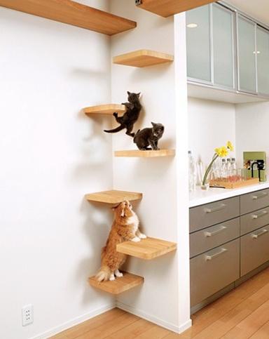Cat House On The Company Asahi Kasei Ideas For Home Garden