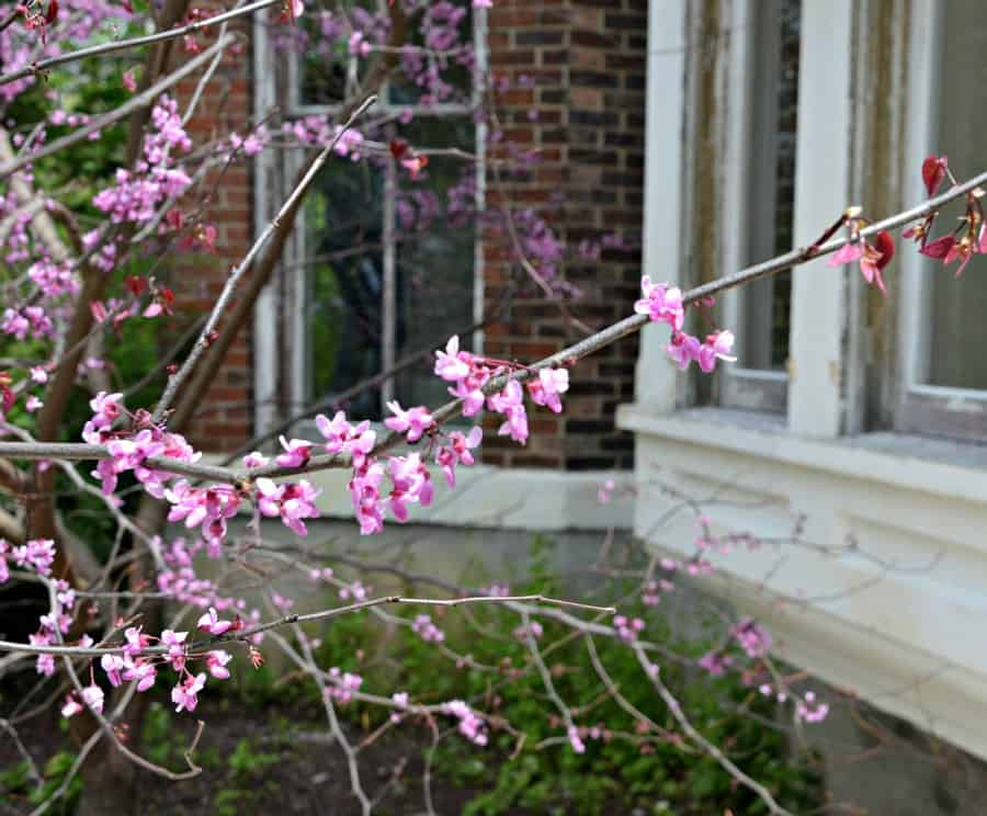 Bleak House Flowering Tree