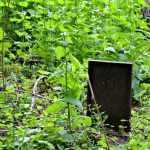 Willard Tour: The Cemetery