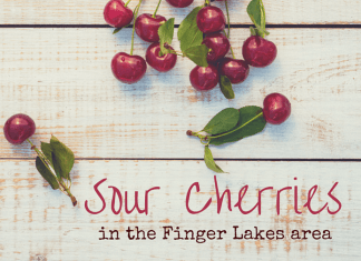 Finding Sour cherries in the Finger Lakes area