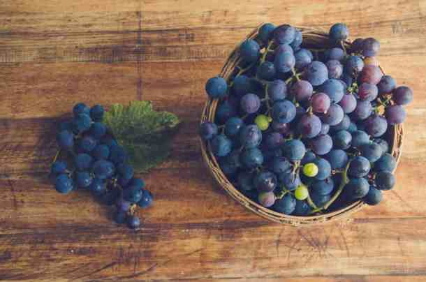 Homegrown Concord Grapes