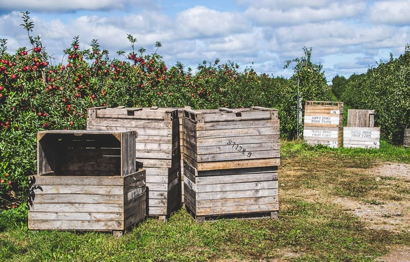 Apple Shed Orchard Autumn 2015