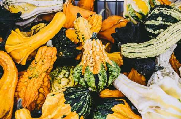 Apple Shed Gourds Autumn 2015