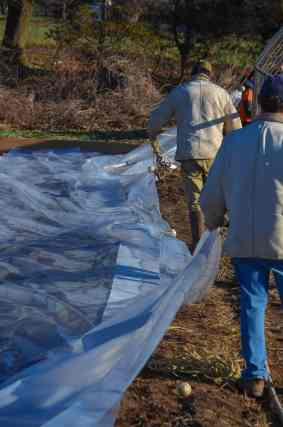 The rope that is attached to the hoop house is thrown over to the other side and the plastic is carefully pulled over