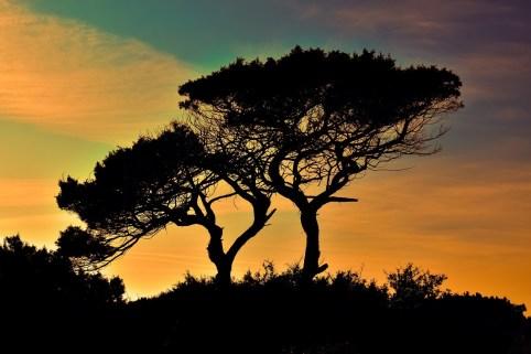 Cypern Cyprus