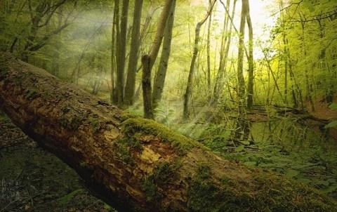 skov forest outdooe