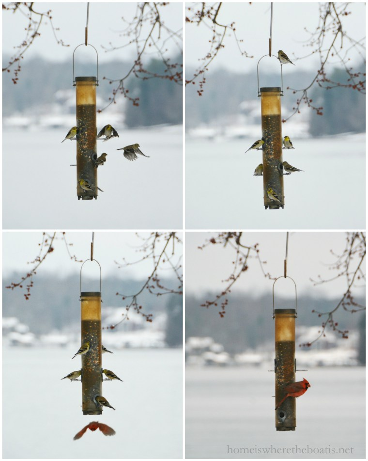 birds at feeder-001