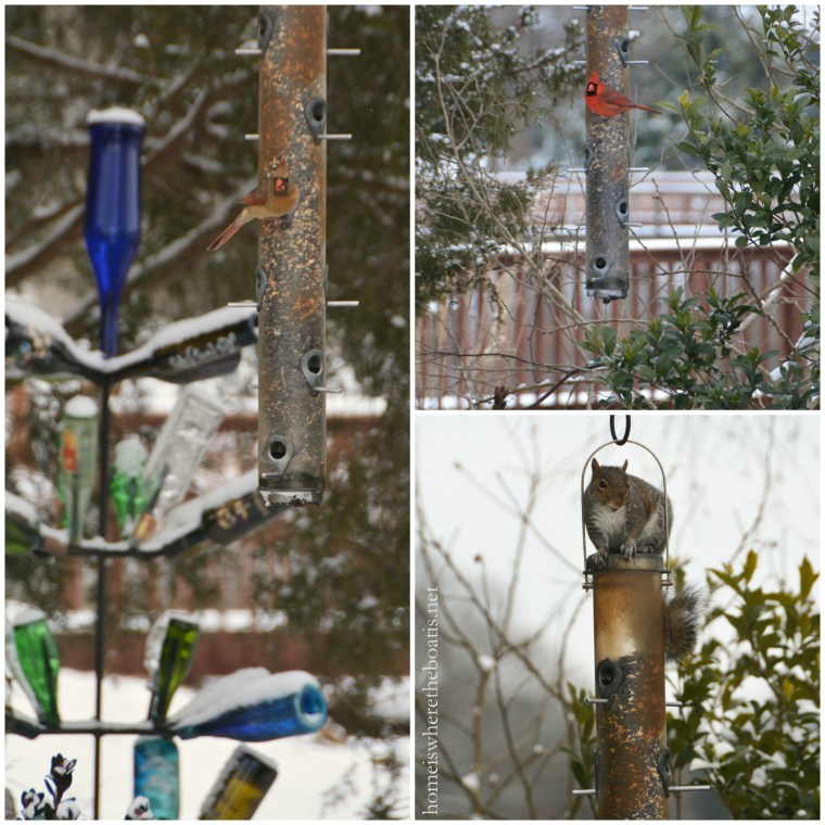 PicMonkey Collage feeder-001