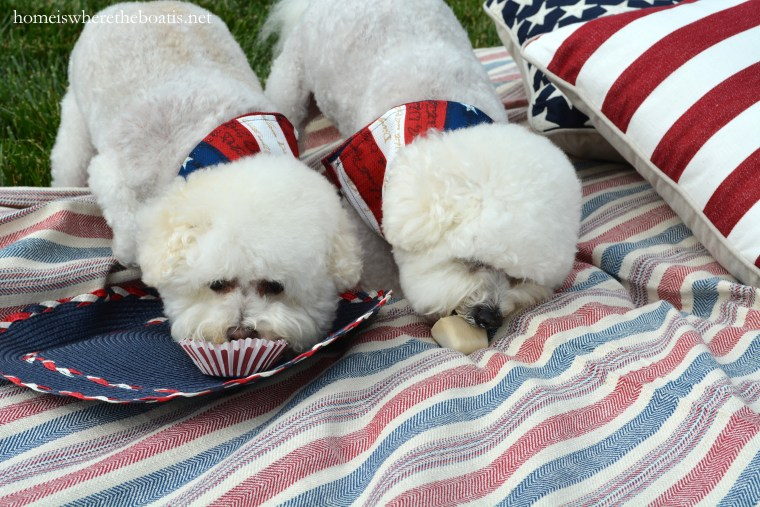Quick and Easy Frozen Dog Treats for Summer, aka Copycat Frosty Paws Recipe   ©homeiswheretheboatis.net #dogtreats #easy #summer #BichonFrise