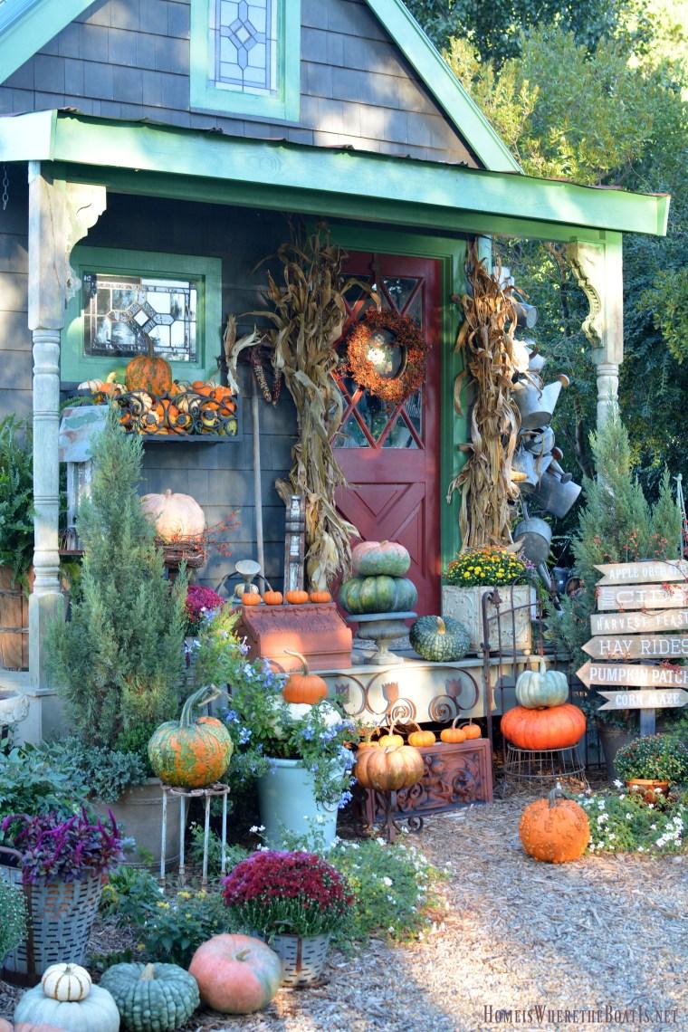 Fall Harvest Around the Potting Shed | ©homeiswheretheboatis.net #pumpkins #fall #mums #pottingshed