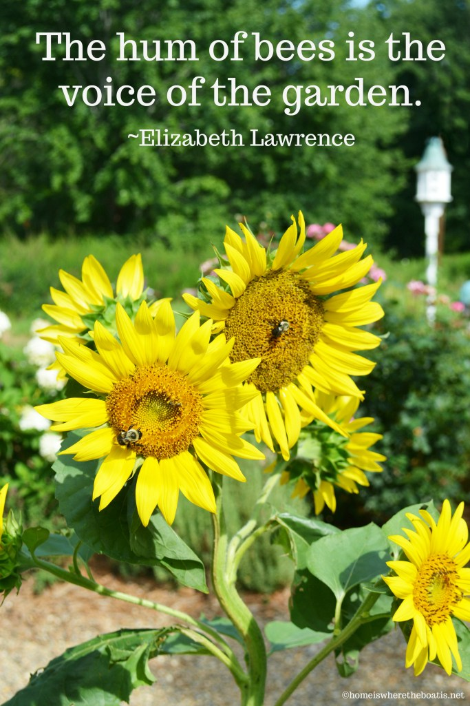 The hum of bees is the voice of the garden | ©homeiswheretheboatis.net #sunflowers #bees