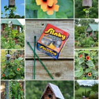 Slinky Hack and Trellis for a Favorite Flowering Vine