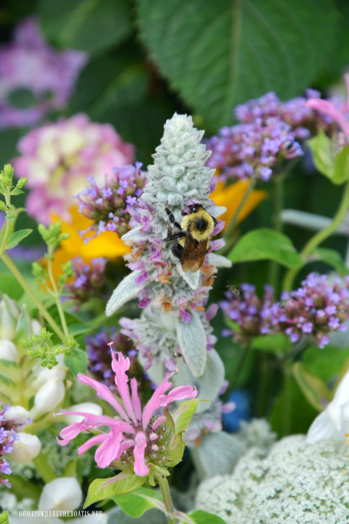 Bee on Lamb's Ear | ©homeiswheretheboatis.net #garden #flowers #bees #earthday