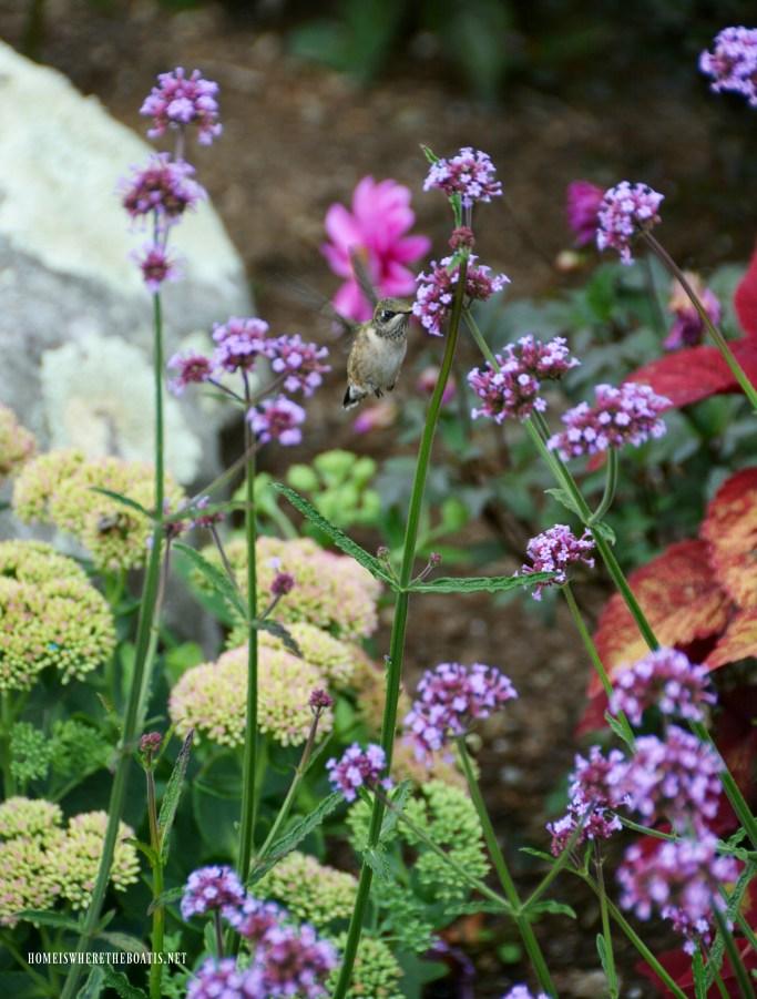 Attracting Hummingbirds to your garden | ©homeiswheretheboatis.net #hummingbirds #tips #DIY