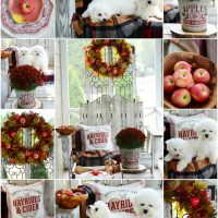 Apples on the Porch and a Harvest of Apple Recipes