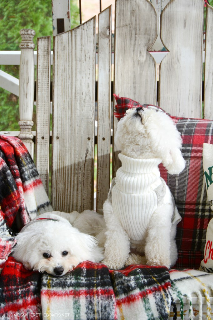 Lola and Sophie on the porch | ©homeiswheretheboatis.net #christmas #porch #dogs