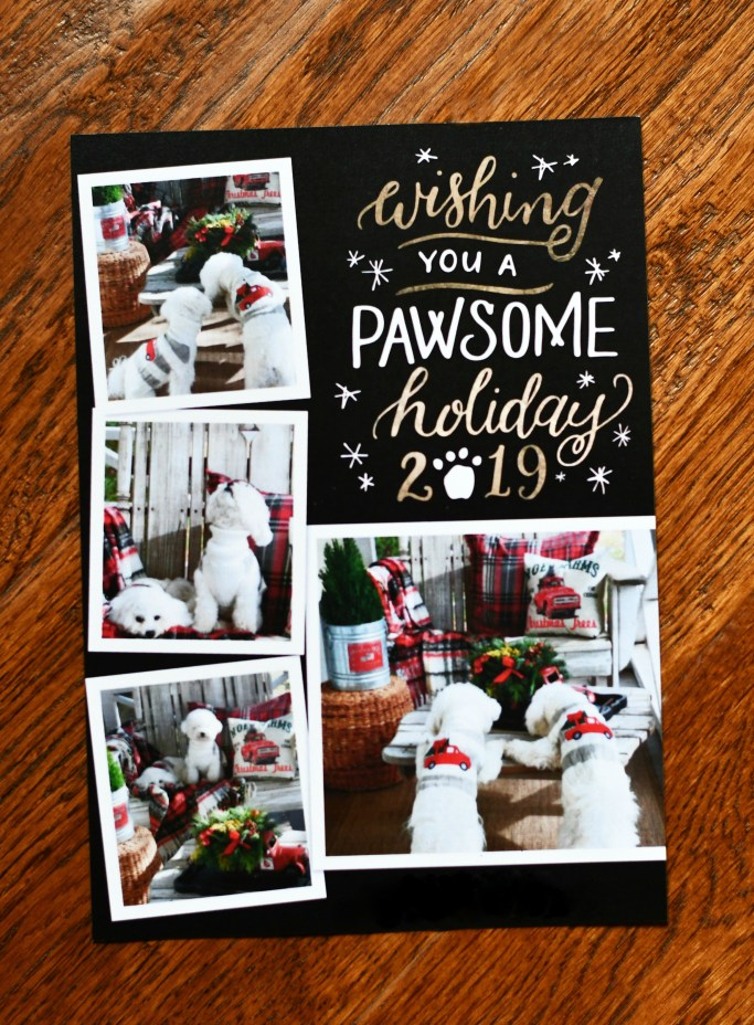 Wishing You a Pawsome Holiday 🐾🐾