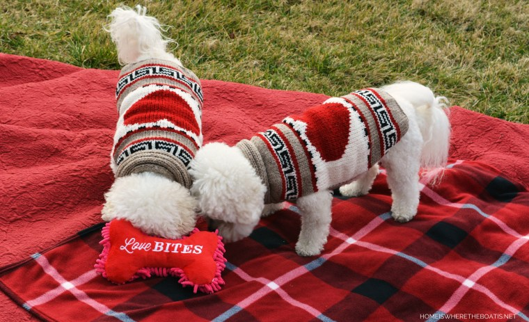Happy Valentine's Day from Chloe and Gracie | ©homeiswheretheboatis.net #valentinesday #dogs #BichonFrise