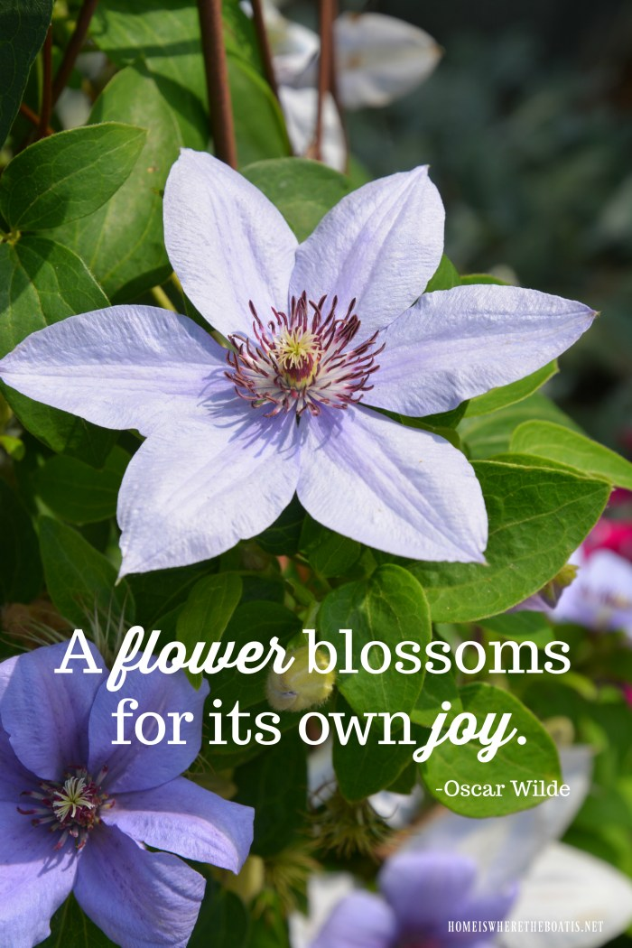 """A flower blossoms for its own joy."" -Oscar Wilde"