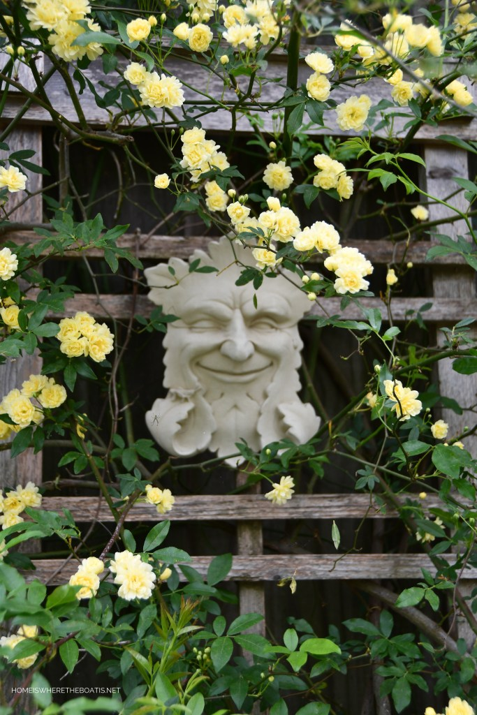Garden Smiles and Lady Banks Rose | ©homeiswheretheboatis.net #spring #garden #flowers